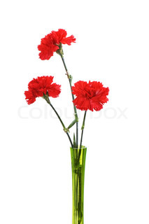 Three red carnations in green vase isolated on white