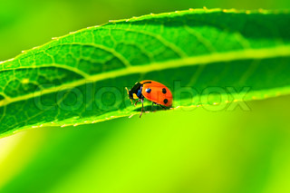 Lady bug sitting on the long green leave