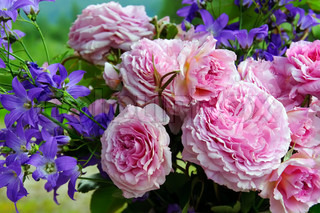 Bouquet of pink roses and bluebells