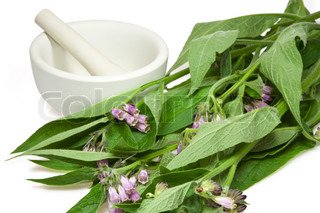 Comfrey with mortar and pestle over white background