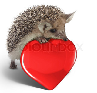 hedgehog on red heart