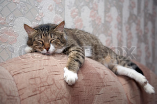 Cat sleeping by sofa. Kuzia - senior cat (12 y.o.)