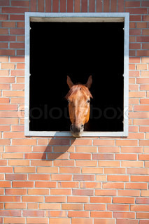 horse looking outside window the brick stable
