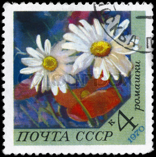 USSR - CIRCA 1970: A Stamp printed in USSR shows image of a Daisy, series, circa 1970
