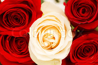 Close uo of red and white roses