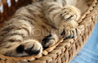 paws of baby cat sleeping in basket closeup