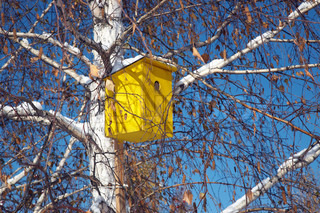 Birdhouse by the birch. Park in the center of Novosibirsk, 22 october 2006