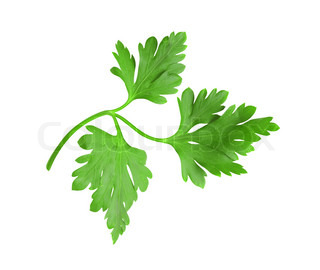 fresh green herbs (leaf) parsley isolated on white background
