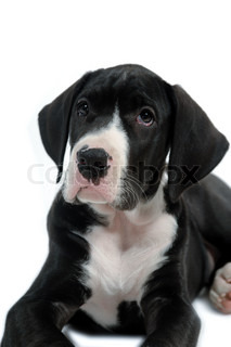Sweet puppie on a white background