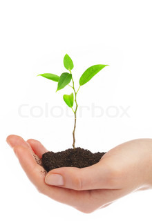 Human hands hold and preserve a young plant