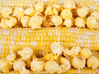 Corn in a cobs and popcorn as background