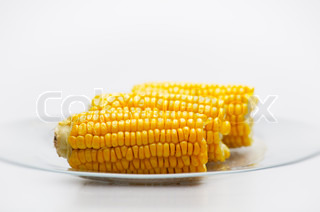 Still life of Corn Cobs on a glass plate. Isolated on White background. Small Depth of  Field.