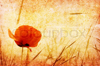 A vintage picture of a red poppy