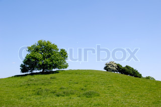 A tree on top of a hill with blue sky.