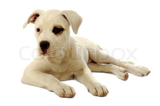 Sweet sad puppy resting on a white background
