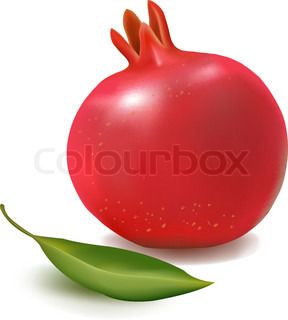 Fresh pomegranate with green leaf. Vector illustration.