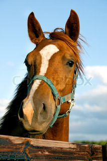 Closeup of the head of a horse on sky background