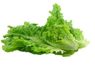 Leaf of lettuce on white background. Isolated over white