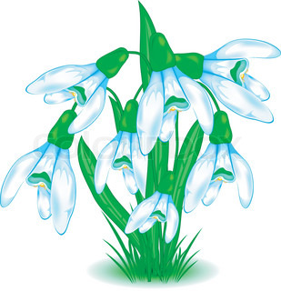 Brush of snowdrops, first spring flowers in blue and green