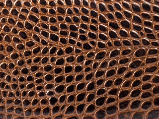 Crocodile leather as background