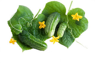 green cucumber vegetable fruits with leafs and flowers isolated