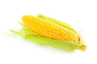 Fresh raw corn cob with leaves isolated on the white