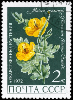 USSR - CIRCA 1972: A Stamp printed in USSR shows the Yellow Hornpoppy, with the description