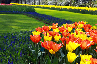 field with different colorful flowers in the spring