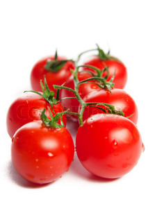 The branch of tomato. Isolated on white.