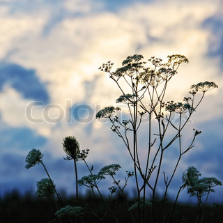 Flower Floral Silhouette against Sunset Cloudy Sky