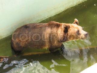 photo of the brown bear in zoo