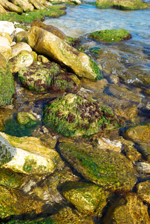 Coast with stones with green marine algae.