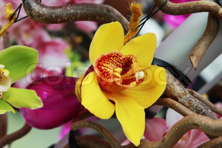 yellow orchid flower in purple vase on the tree