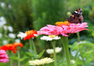 butterfly on a bright flower in the sammer garden