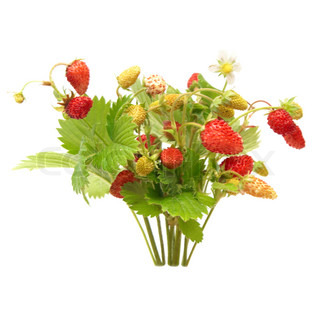 Wild strawberries isolated on the white background