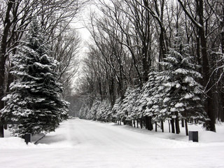 alley of the park, winter landscape