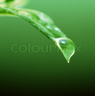 Water drops on green leaf for your design