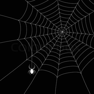 spider and spider web isolated on the