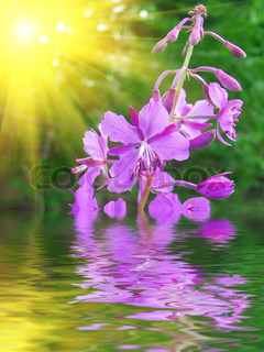 Lilac flower in water against a shining sun