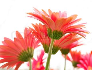 Billede af 'bouquet, isoleret, blomster'