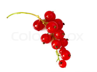berries of red viburnum isolated on white