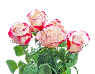 Bunch of beautiful bright roses isolated on white