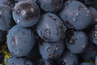 Red grapes with water drops