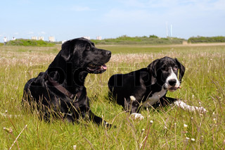 Two dogs is resting in the grass on a hot summer day