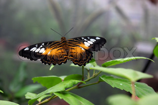 Beautiful butterfly close up on leaf