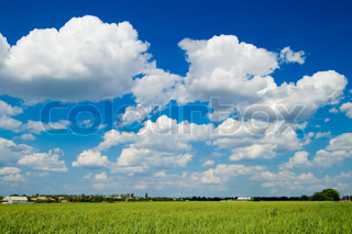 Landscape green filed the blue sky and white clouds