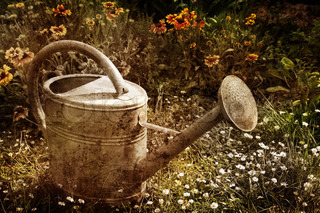 Vintage picture of a water can in a garden