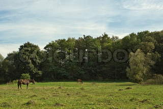 Landscape with horses grazing on the background of the forest
