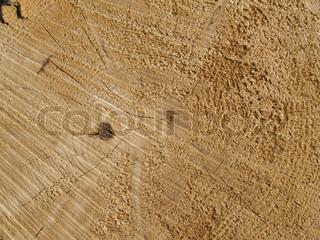 Schnitt Protokoll Holzmaserung