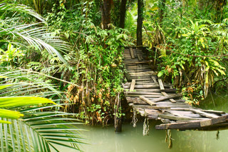Old small bridge through a river in a tropical forest
